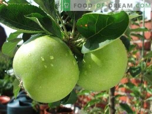 Bulk Apple