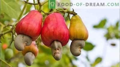 15 Früchte, die wir essen, aber nicht wissen, wie sie wachsen