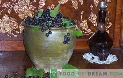 How to make black currant wine? Five recipes for simple homemade blackcurrant wines: young, dessert, liqueur