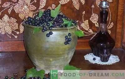 Kako narediti črno ribezovo vino? Pet receptov za preprosta domača vina iz črnega ribeza: mlada, sladica, liker