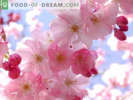 Sakura jam: jak gotować