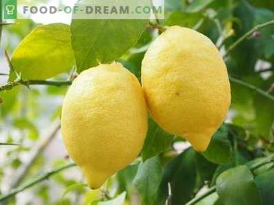 Cytryny: korzyści i szkody